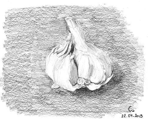 Une simple tête d'ail
