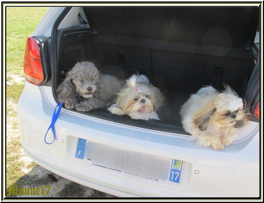 Quelques nouvelles photos de nos 3 Mousquetaires
