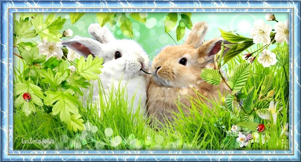 Entêtes printemps dans l'herbe, Les lapnous