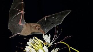 Animal nocturne ...