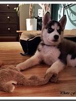 Malika (2 mois)