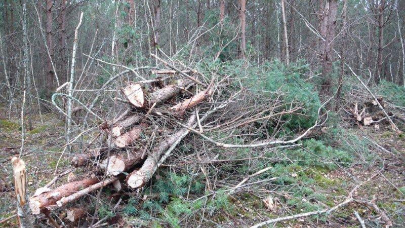 les fagots de bois énergie à reprendre au porteur