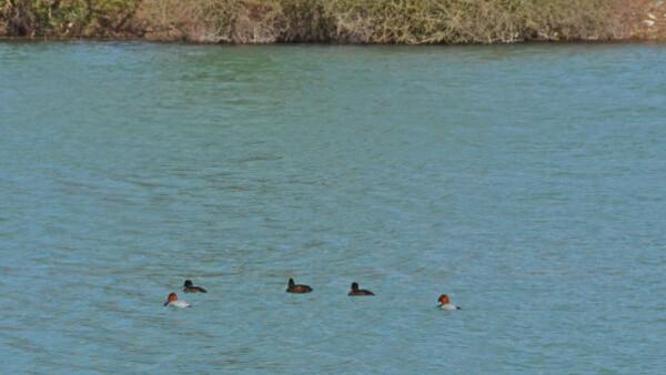 Lac-d-Artix 8336