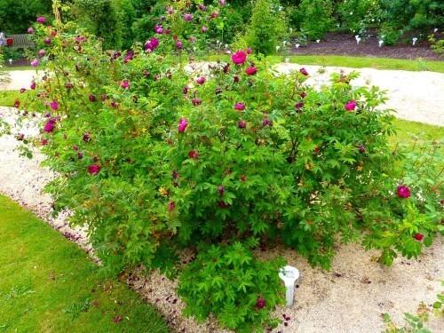 Phenomene rouge juin 2010001