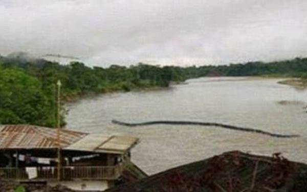 Cryptozoologie - Un serpent géant photographié à Bornéo