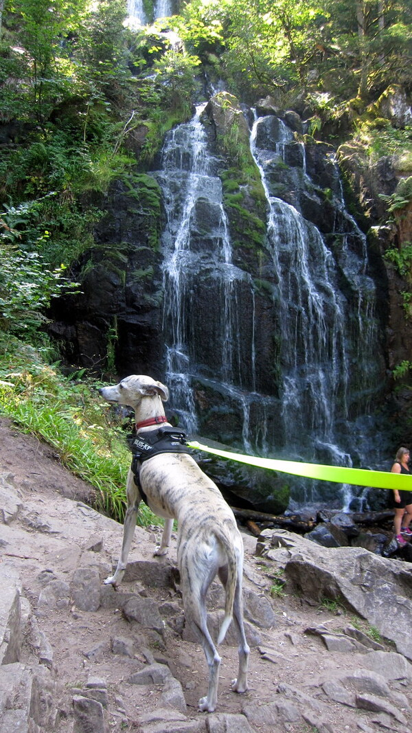 Mowgli aux cascades