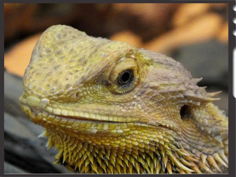 86320Civaux la Planète des Crocodiles
