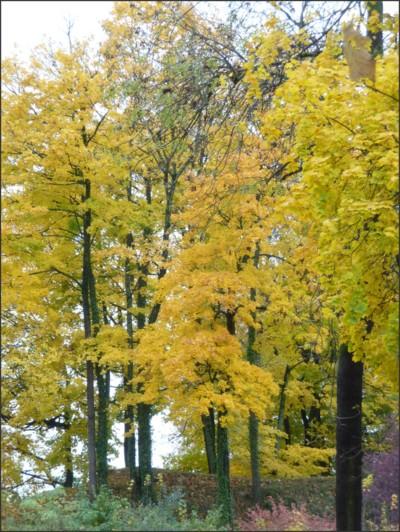 Blog de turlututu : mimipalitaf et ses photos, automne dorée,