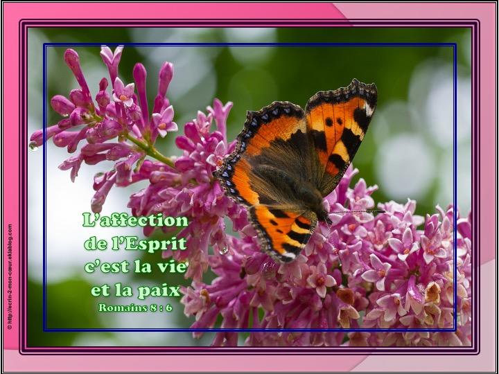 L'affection de l'Esprit c'est la vie et la paix - Romains 8 : 6