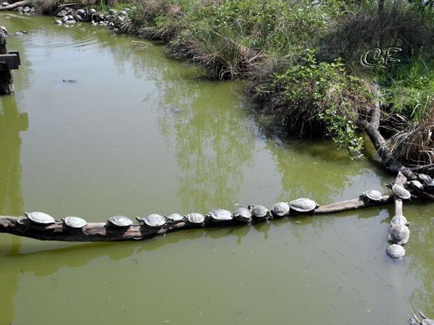 Parc Ste Croix héron tortues de Floride