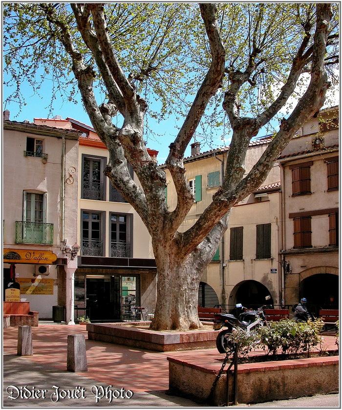 66 - Pyrénées Orientales / Thuir