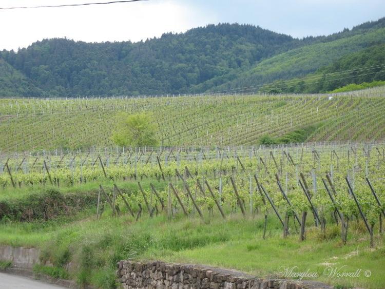 Dambach-la-Ville (67) Sortie du 19 mai