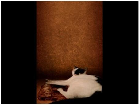 A la mlanière de Yann Arthus-Bertrand par Mathilde (209)