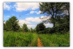 06 2019 - Forêt domaniale Saint Gély du Fesc