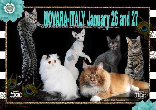 Expositions du mois de Janvier :