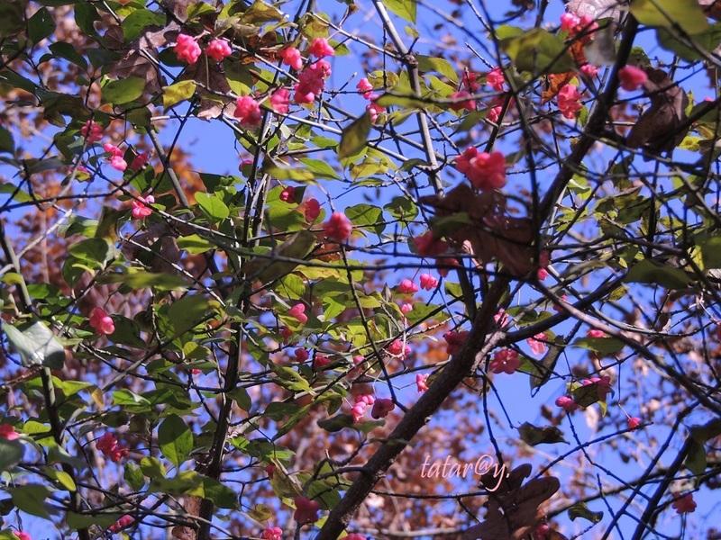 Belles couleurs en cette fin de l'automne !...
