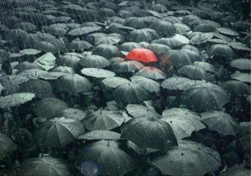 Un peu de couleur sous la pluie