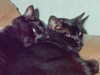Leo & Figaro