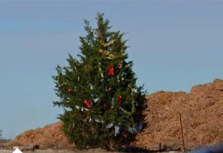 À Noël, un inconnu décore tous les ans un sapin géant de sa ville