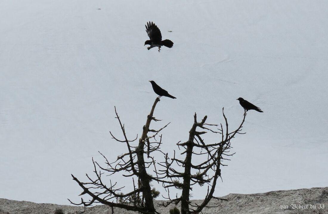 des oiseaux sur la neige