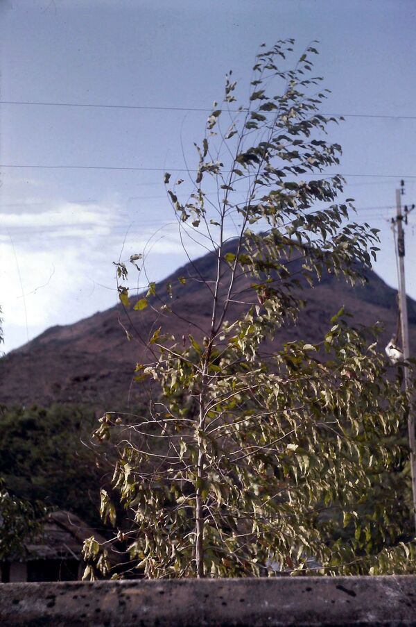 SUITE N° 12 SUR L'INDE : TIRUVANAMALAI
