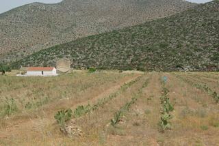 de Léonidia à Nauplie - champ de cactus
