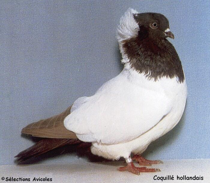 Principales causes de mortalité chez le pigeonneau au nid