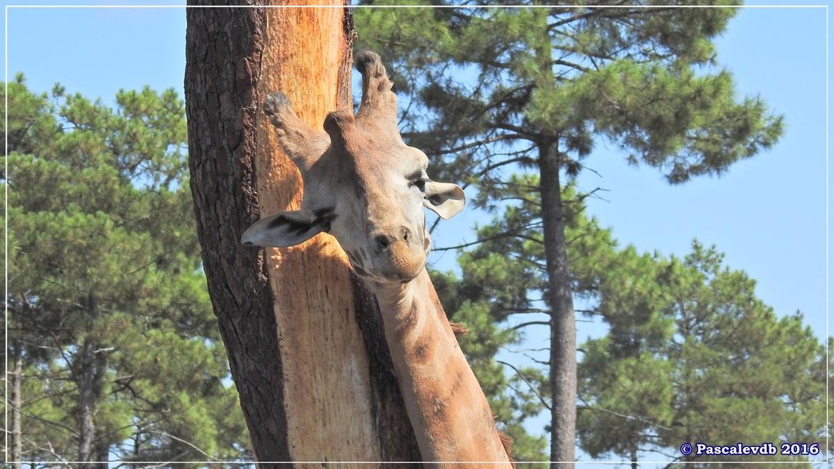 Zoo du Bassin d'Arcachon - Août 2016 - 8/15