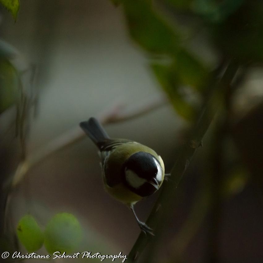 Les petites ailes du jardin (1)