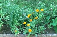 Les soucis du jardin