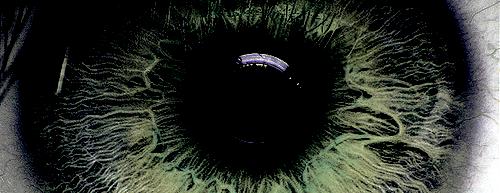 Les iris noirs repousseront sur les cendres