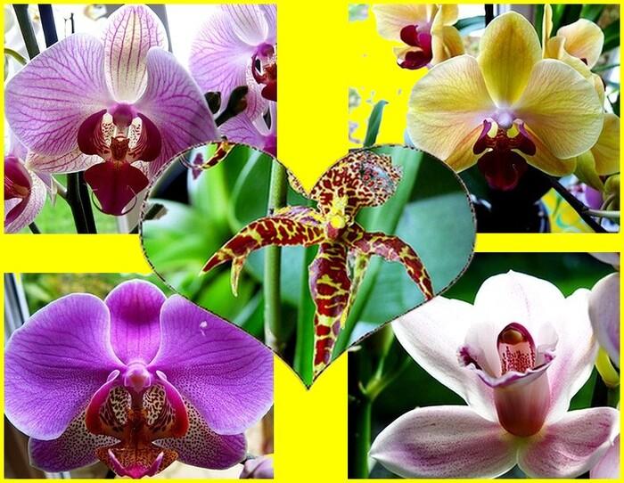 Expo d'orchidées