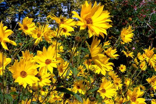 De belles fleurs jaunes