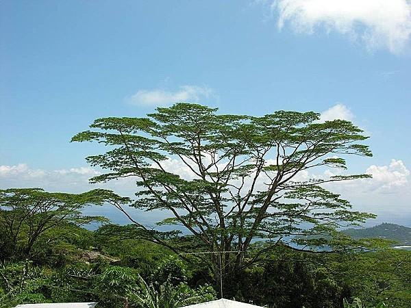 800px-Seychelles_049.jpg