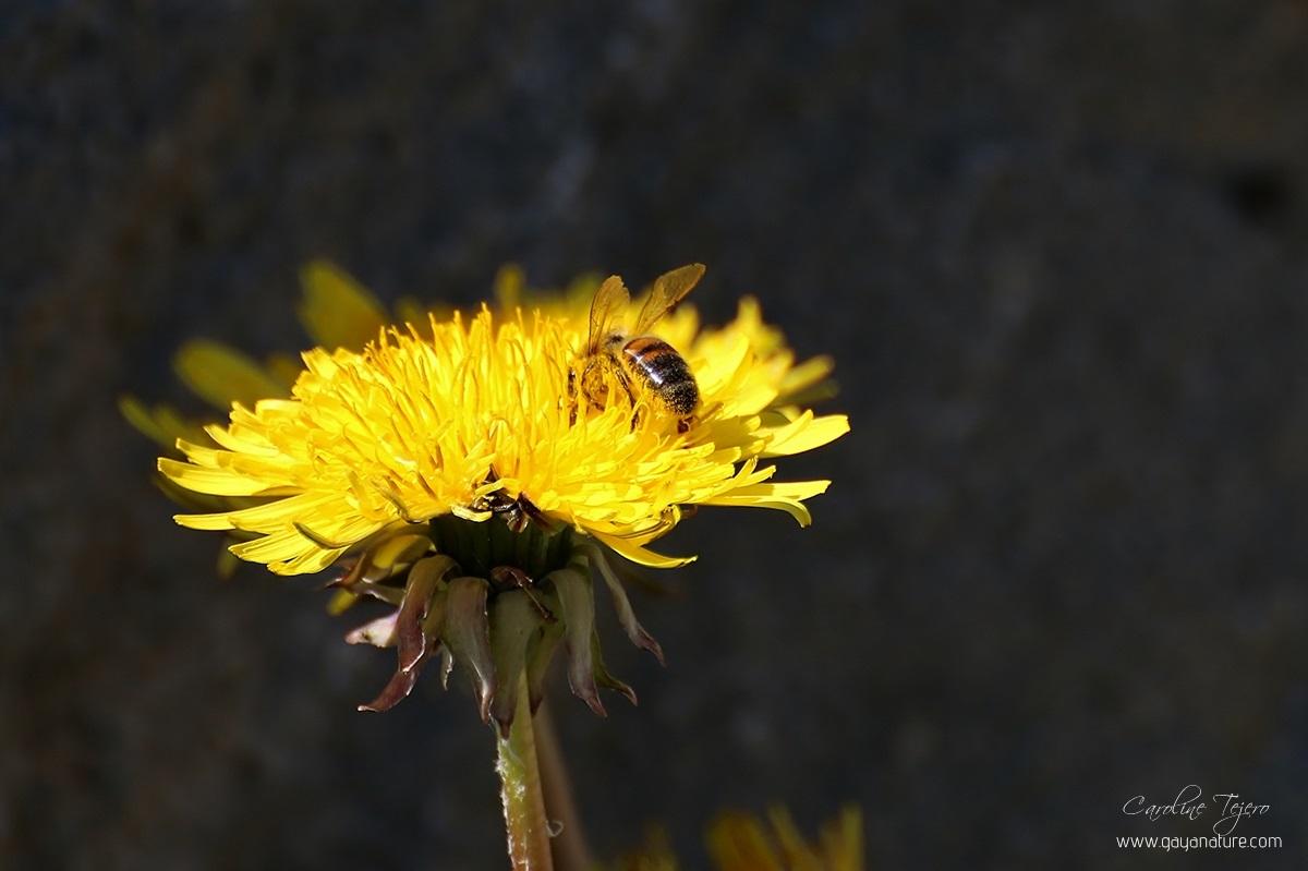 Plongeon dans le pollen