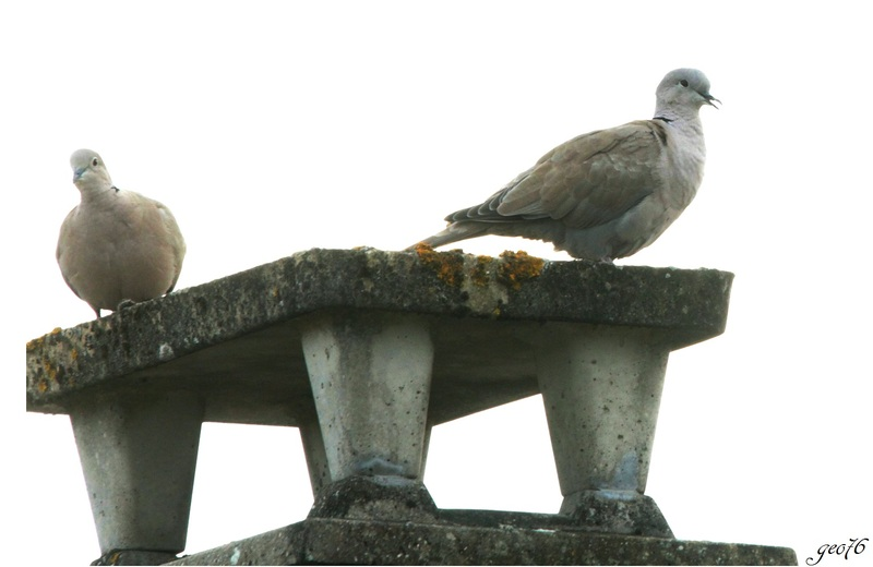 Couple d'oiseaux...!!