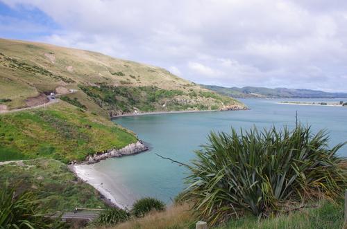 Jour 10 - Otago Peninsula