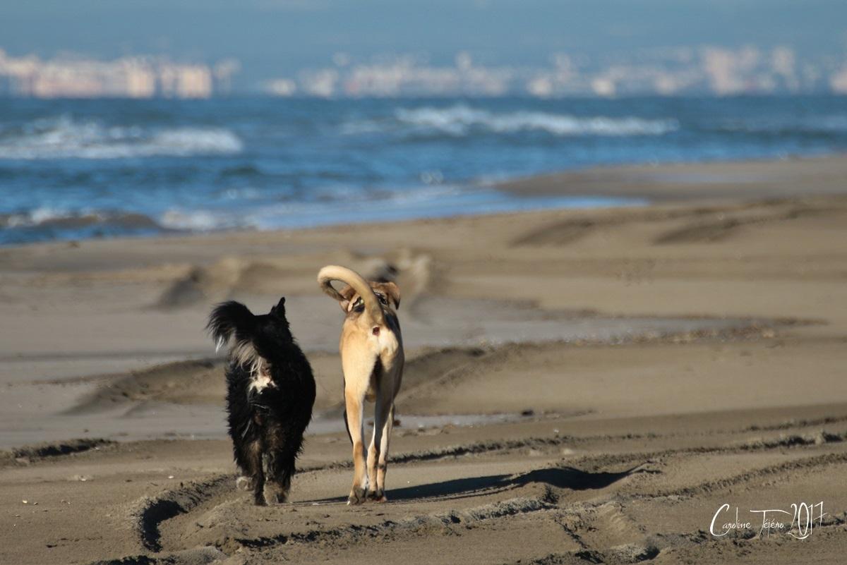 Rencontre sur la plage d'Espiguette
