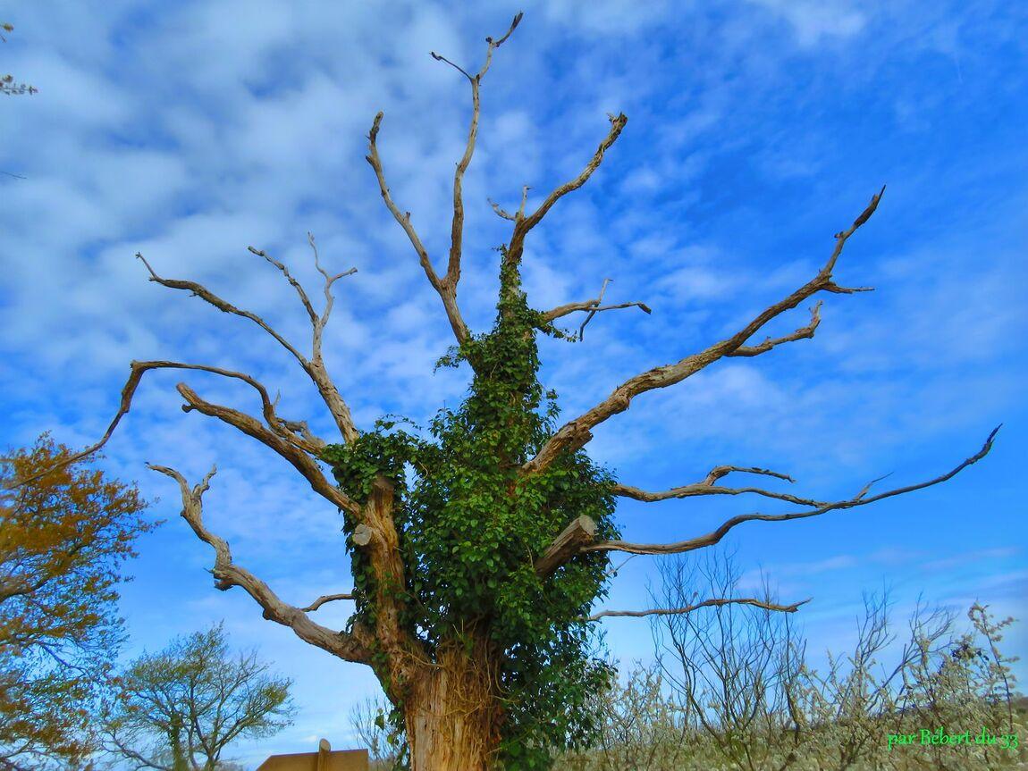 un arbre vu par APN