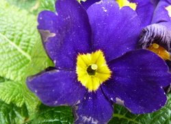 dégradé de violet