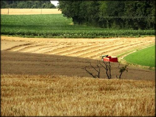Champ moissonné, tracteur, arbre