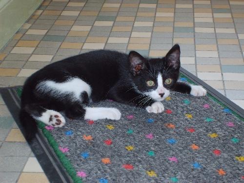 mon chat : Joris