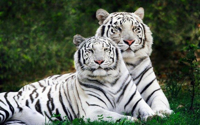 Visite En Inde...Au Royaume Du Tigre
