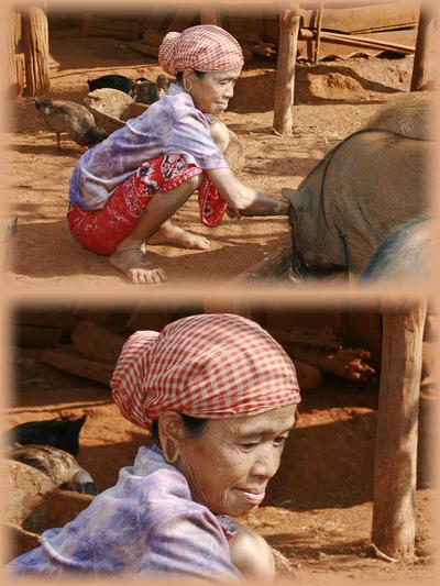 Blog de images-du-pays-des-ours :Images du Pays des Ours (et d'ailleurs ...), Grands soins pour petits cochons - Village de l'ethnie Kreung - Rattanakiri - Cambodge