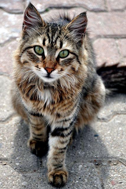 Résultats de recherche d'images pour «beautiful cat»