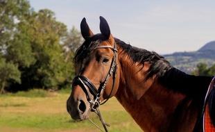 Un cheval. Illustration.
