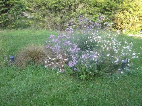 Le jardin a bien changé