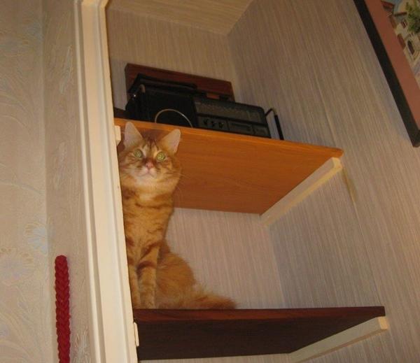 dans l'étagére