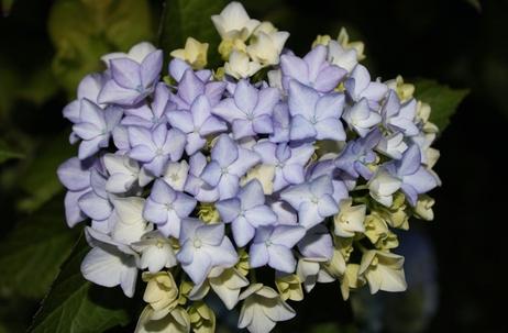 Jardin en fleurs ! (7)