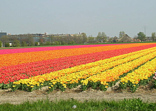 Escapade au pays des Tulipes